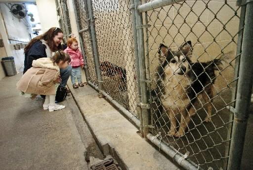 Benton City Dog Rescue
